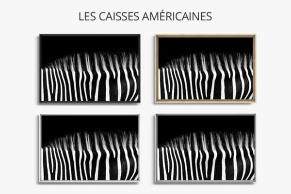 tableau-dos-zebre-caisse-americaine
