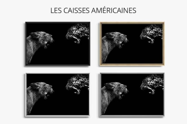 cadre photo felides caisse americaine