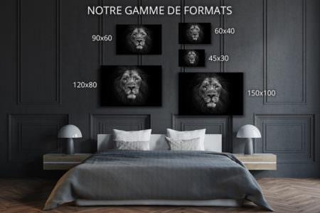 cadre photo lion dafrique deco formats