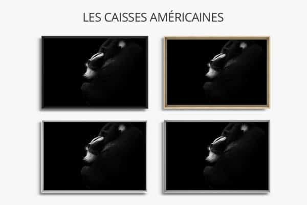 cadre photo mandrill caisse americaine