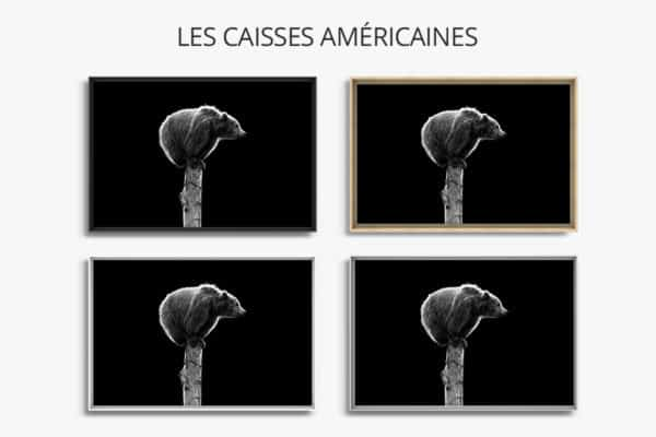 cadre photo ours brun caisse americaine