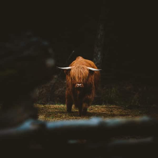 photo-highland-hugo-grandcolas-carre