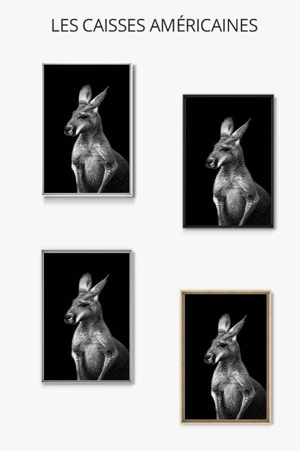 cadre photo kangourou sans lueur caisse americaine