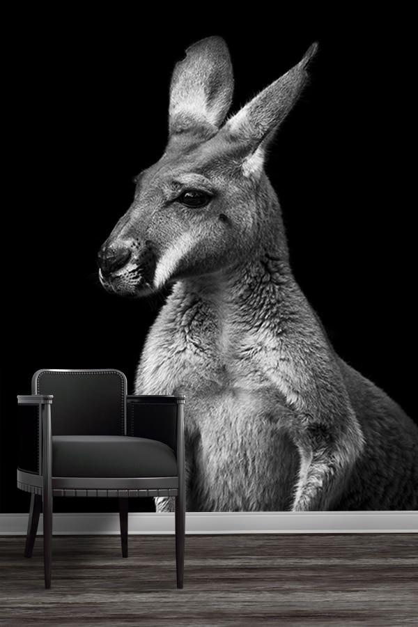 photo kangourou sans lueur papierpeint