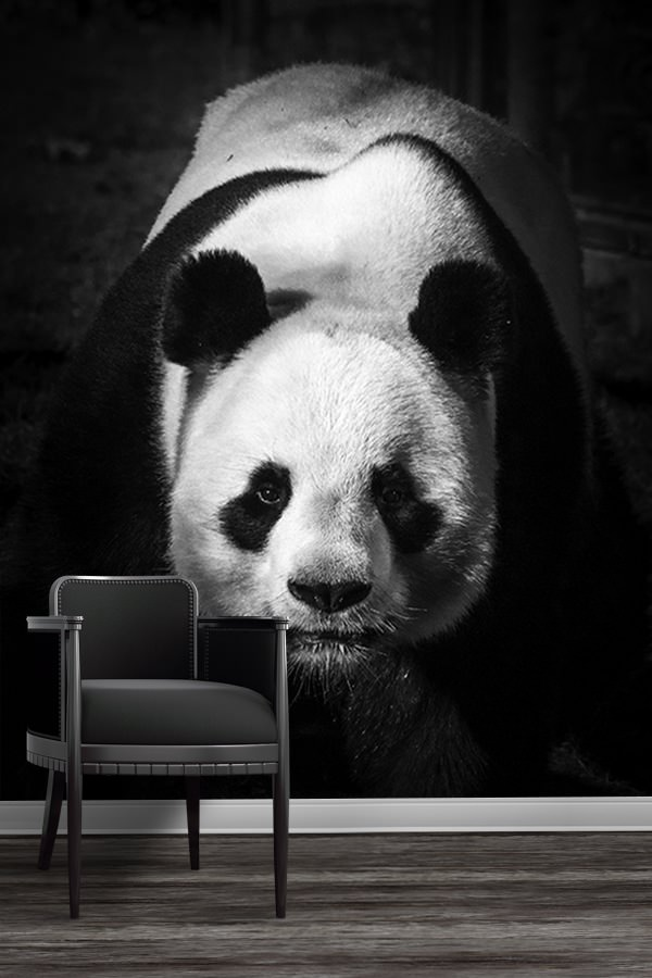 photo panda dominant papierpeint