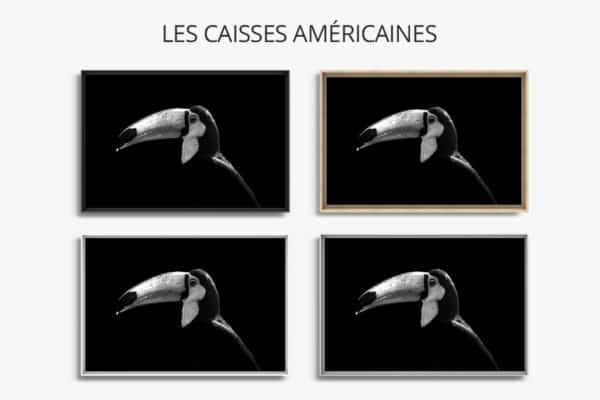 cadre photo toucan caisse americaine