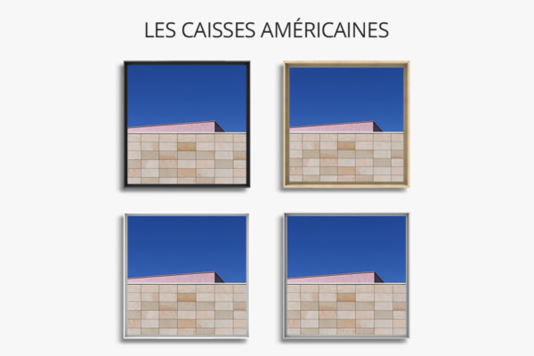 photo-emmergence-de-rose-caisse-americaine