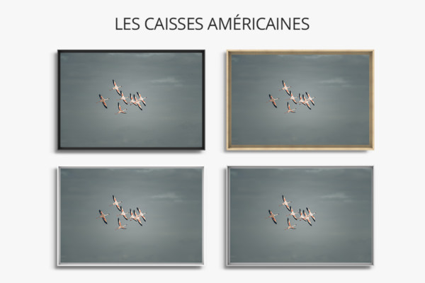 PHOTO_Envolee Sauvage_CAISSES-AMERICAINES