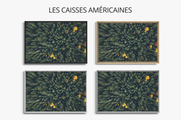 PHOTO LA FORET CAISSES AMERICAINES