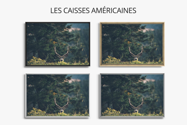 PHOTO LeCerfTimide CAISSES AMERICAINES