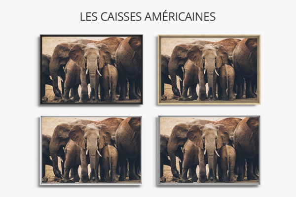 PHOTO LeTroupeau CAISSES AMERICAINES
