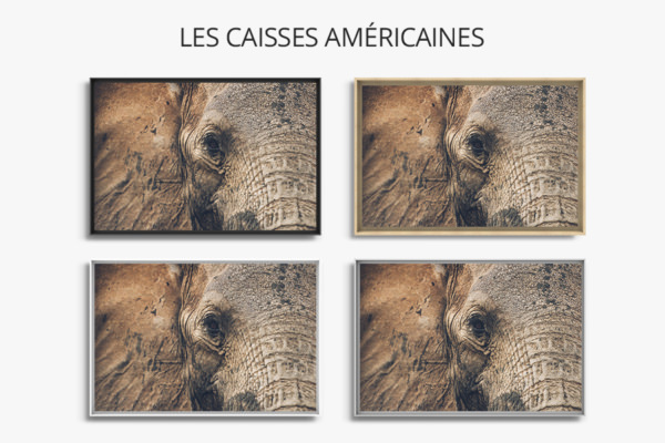 PHOTO Lesyeuxdoux CAISSES AMERICAINES