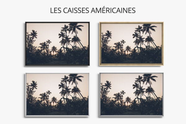 PHOTO PalmiersauKerala CAISSES AMERICAINES