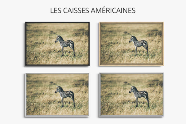 PHOTO PetitZebre CAISSES AMERICAINES