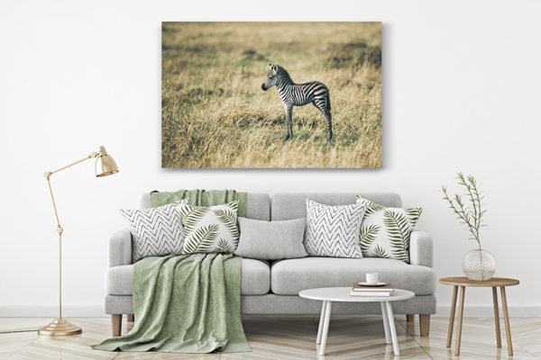 PHOTO PetitZebre DECO