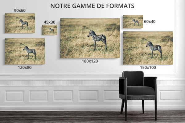 PHOTO PetitZebre FORMATS DECO