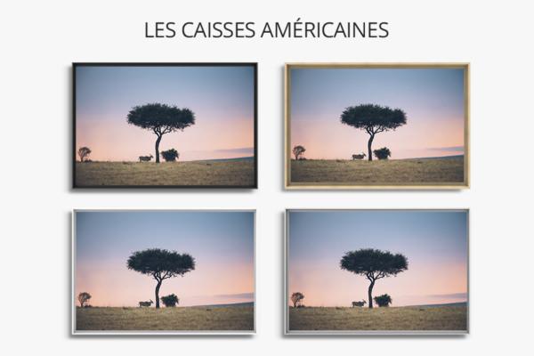 PHOTO Savane CAISSES AMERICAINES