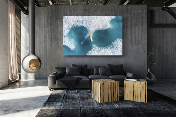 photo au dessus de lours polaire deco