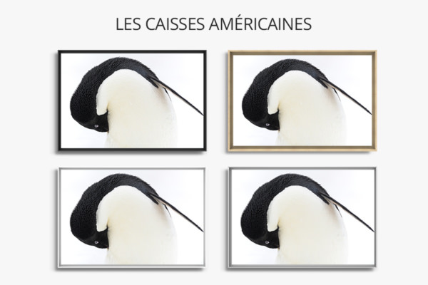Photo manchot adelie caisses americaines