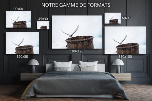 Photo sterne arctique formats deco
