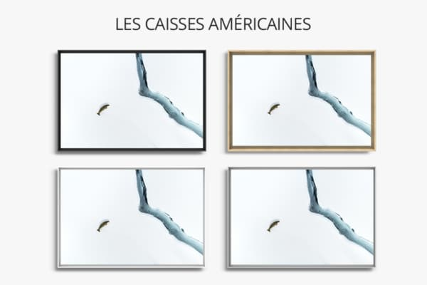 Photo Solitaire phoque crabier CAISSES AMERICAINES