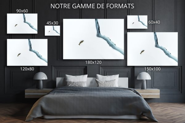 Photo Solitaire phoque crabier FORMATS DECO