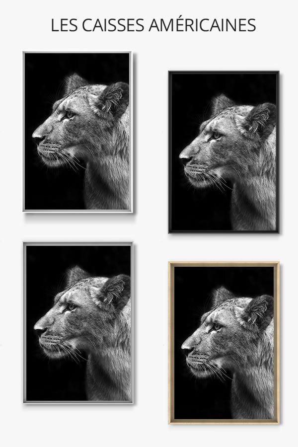 PHOTO Lionnescruteuse CAISSE AMERICAINE