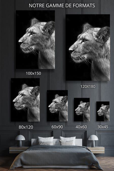 PHOTO Lionnescruteuse FORMATS DECO