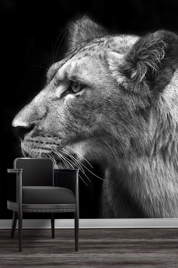 PHOTO Lionnescruteuse papierpeint