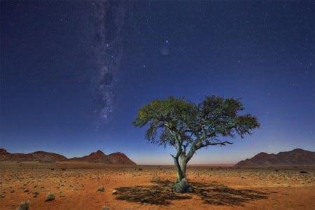 Namibie acacia au clair de lune ©P