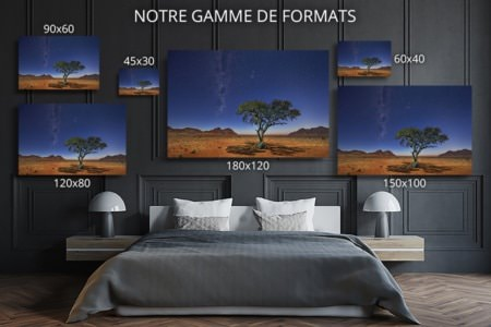 Photo Namibie acacia au clair de lune formats