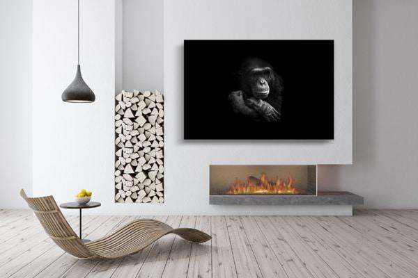 chimpanze-songeur_guillaume_mordacq