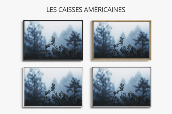 Photo-plantes-caisse-americaine
