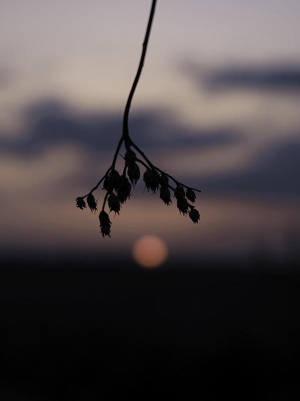 Photo-patience-zoe-pignolet-4-3-120-160