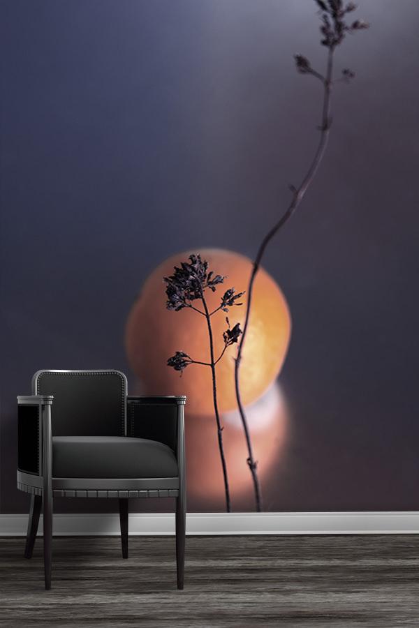 Photo-soleil-papier-peint