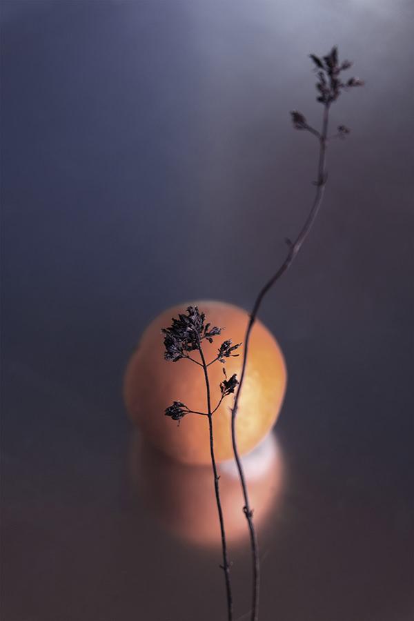 Photo-soleil-zoe-pignolet-3-2-120-180