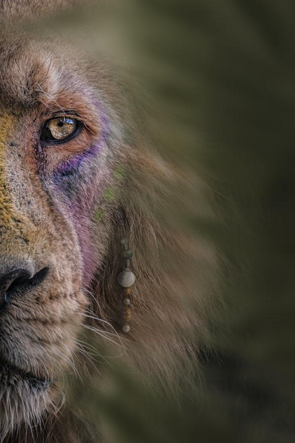 Photo-Le-roi-lion-groc-de-salmiech-charles-3-2_120-180