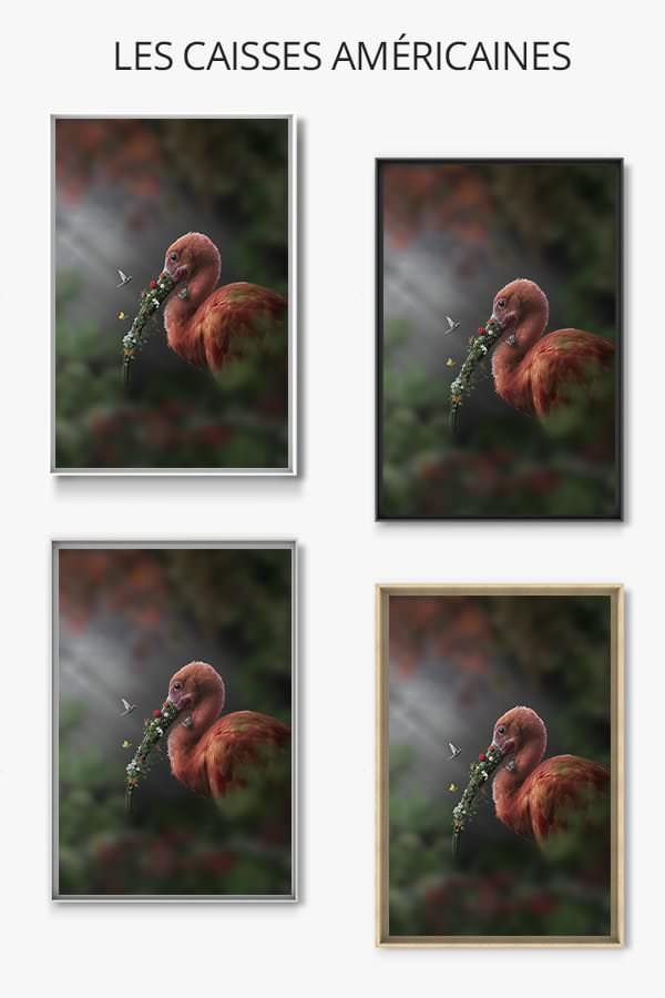 Photo-ibis-fleuri-caisse-americaine