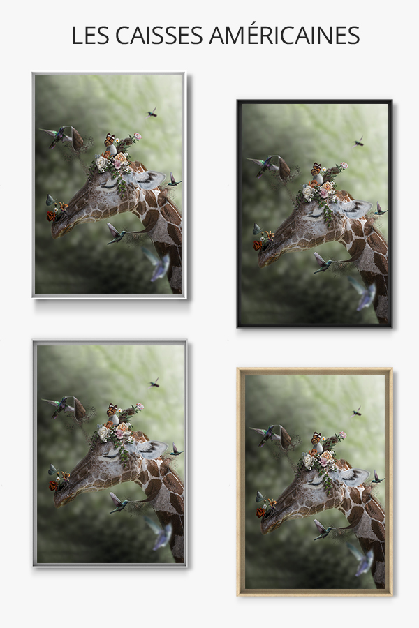 Photo-imagination-caisse-americaine