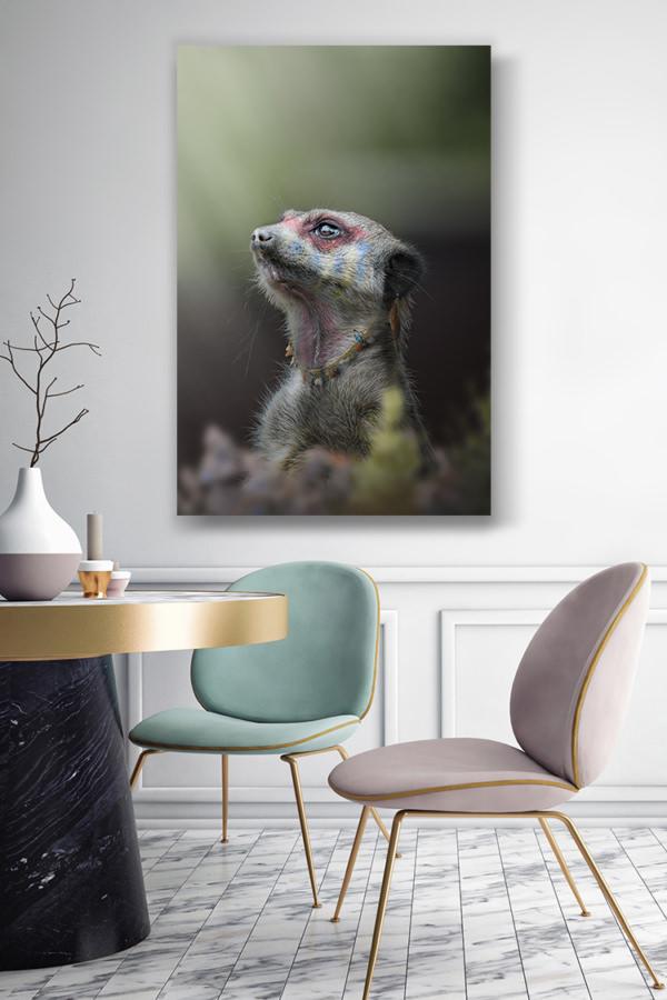 Photo-le-grand-chef-suricate-deco-2
