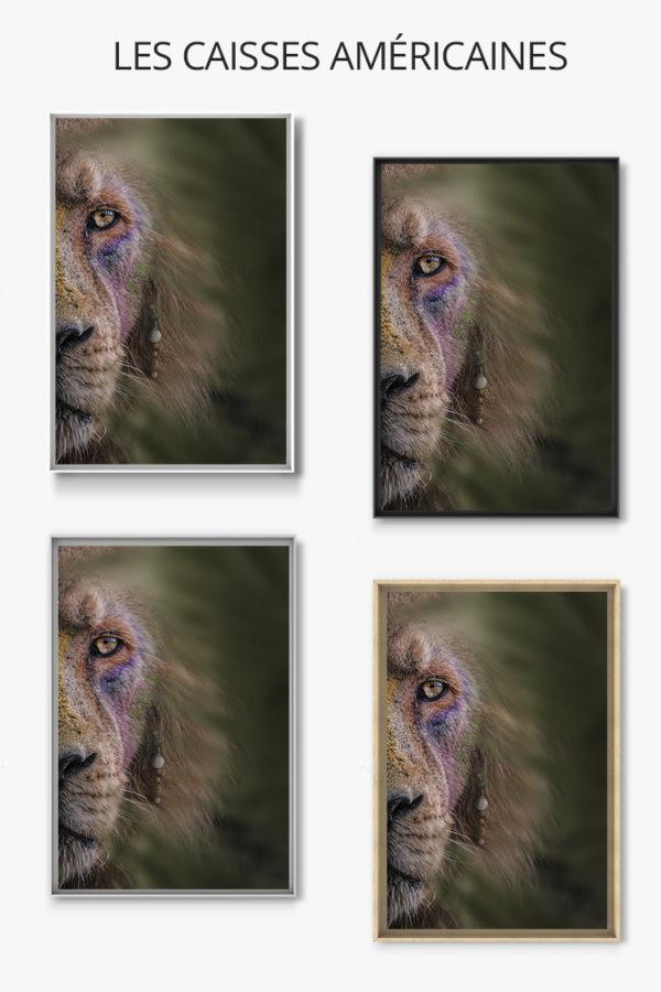 Photo-le-roi-lion-caisse-americaine