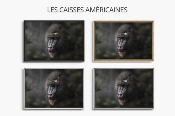 Photo-obstination-caisse-americaine