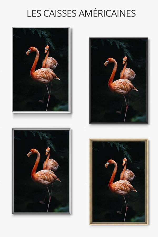 Photo-flamingos-caisse-americaine