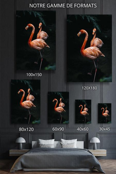 Photo-flamingos-formats-deco