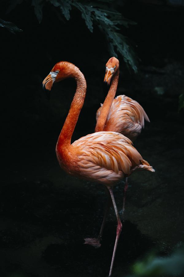 Photo-flamingos-loeil-deos-3-2-120-180