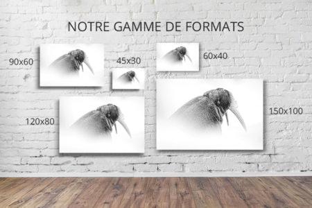 Photo-a-fleur-de-peau-formats-deco