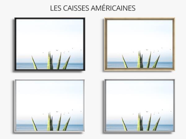 Photo-bleu-agave-caisse-americaine
