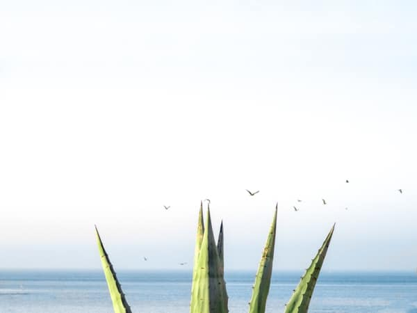 Photo-bleu-agave-laura-sanchez-4-3-90-120