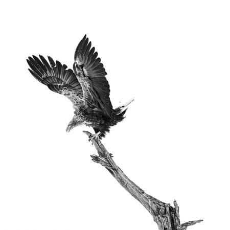 Photo-de-justesse-olivier-larrey-carre-100-100
