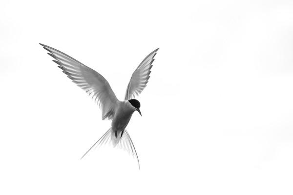 Photo-facon-papillon-olivier-larrey-3-2-120-80
